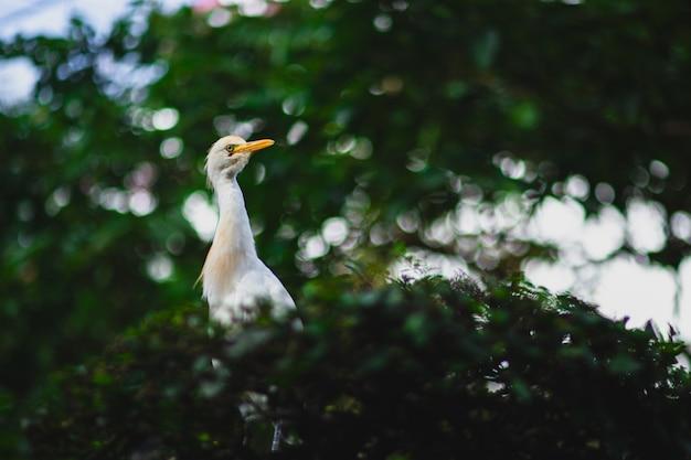 Airone guardabuoi con un lungo becco giallo su un ramo di un albero con uno sfondo sfocato ed effetto bokeh