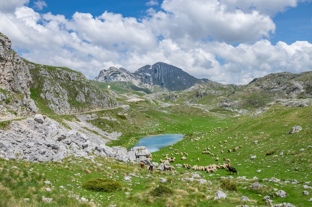 Cattle grazing on a green meadow on the banks of the picturesque mountain lake.