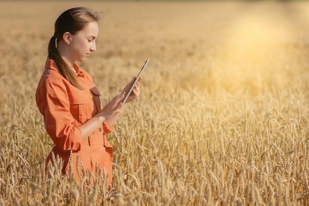 백인 농학자는 곡물 밭을 확인하고 태블릿에서 클라우드로 데이터를 보냅니다.