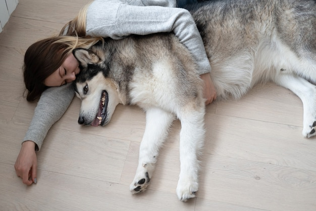 床に横たわっているアラスカンマラミュート犬を抱きしめる白人の魅力的な女性。屋内。人間と動物の間の愛と友情。