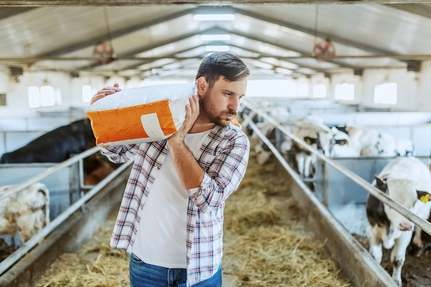 Caucasian farmer in plaid shirt and jeans carrying sack with animal food over shoulder while walking in stable.