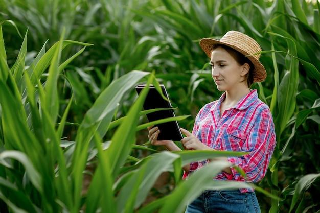Кавказский фермер гуляет по кукурузному полю и рассматривает урожай перед сбором урожая на закате. сельское хозяйство - производство продуктов питания, концепция урожая