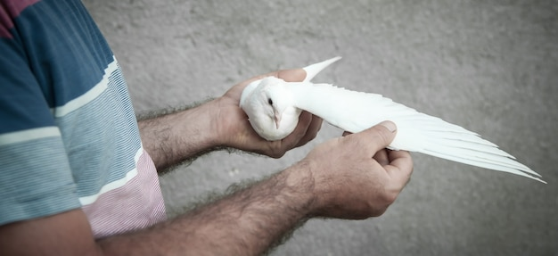 Кавказский мужчина держит голубя на руках.