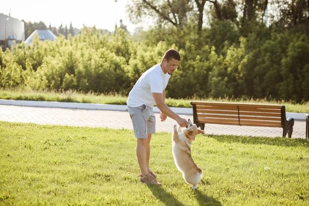 白人男性がコーギー犬を訓練し、餌を与えています。夏の公園の屋外。