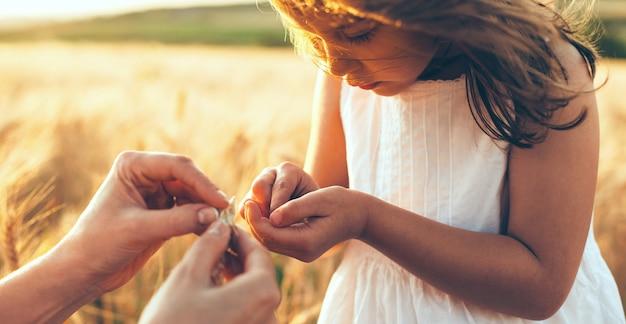 Кавказская мать и ее девочка, глядя на семена пшеницы, позирует в поле на закате