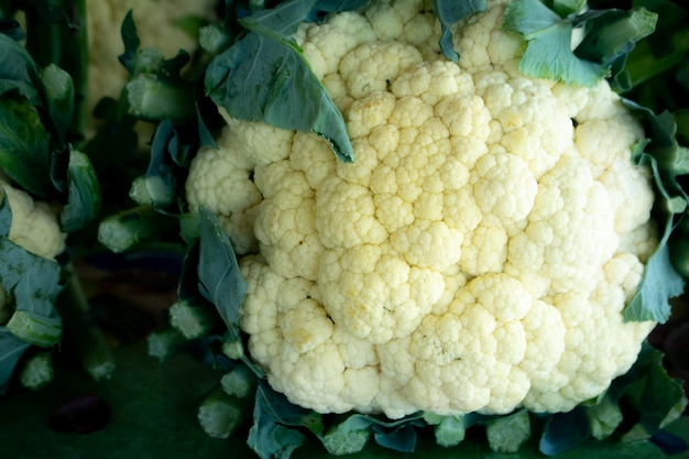 Cauliflowers with green leaves