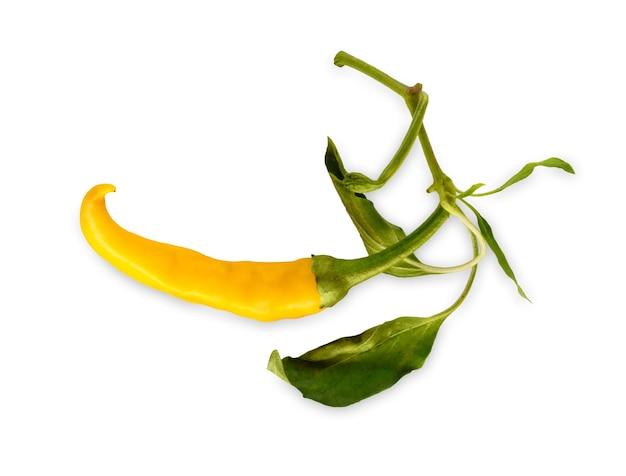カイエン種の黄色の唐辛子habaneroまたはハラペーニョの分離。葉と理想的な辛い野菜のクローズアップ画像。健康的な自然有機食品