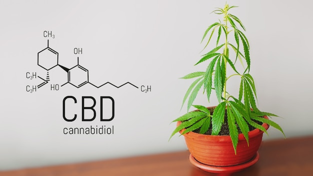 Cbd cannabis formula, structural model of cannabidiol molecule
