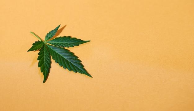 Cbd конопляное масло, капельное, биомедицина и экология, конопляное растение, травы, лекарства, конопляное масло из медицинского экстракта