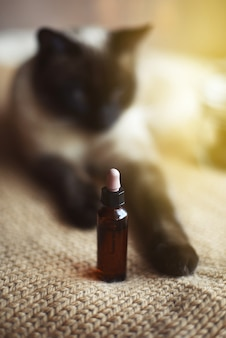 Cbd hemp oil dropper for cats, selective focus and out-of-focus background