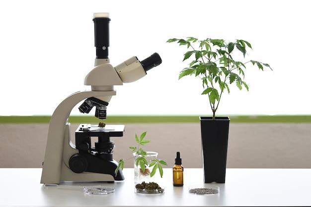 현미경, 식물 및 배양 접시가있는 도심 오일 추출 실험실 벤치