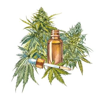 Cbd oil hemp products. watercolor illustration on white