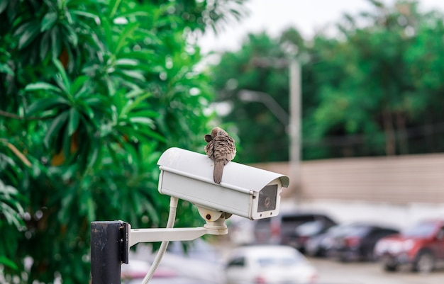 Cctv camera installed on the parking lot for protection security