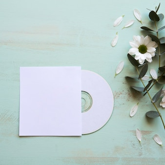 Cd mockup and flower