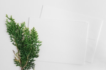 Cedar leaves with two envelope isolated on white backdrop