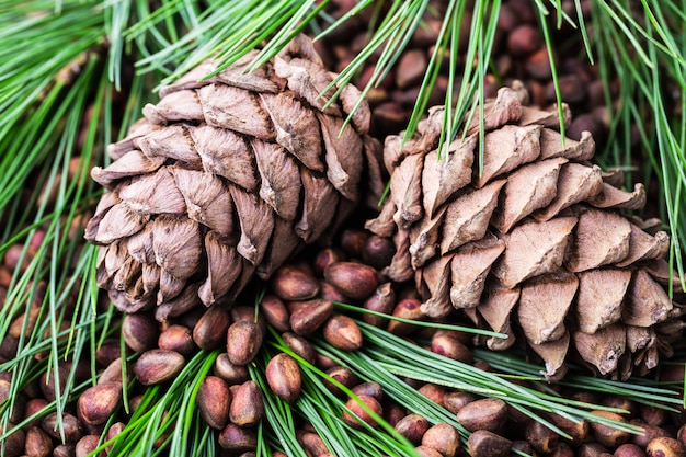 Cedar pine cone with pine nuts close-up top view.