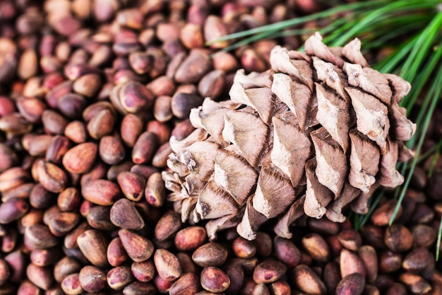 Cedar pine cone with pine nuts close-up with copyspace top view