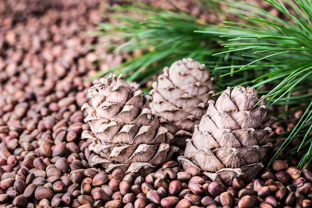 Cedar pine cone with pine nuts