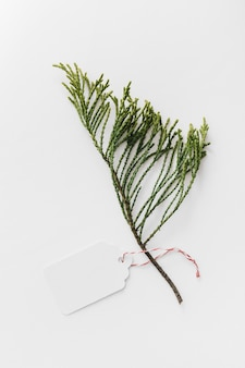 Cedar twig with blank tag isolated on white background