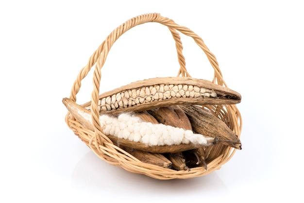 Ceiba pentandra or white silk cotton isolated on white