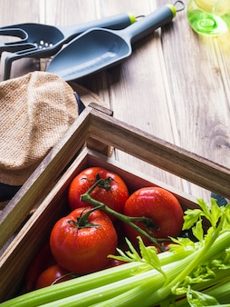 Celery and fresh red tomatoes in crate with gardening equipments