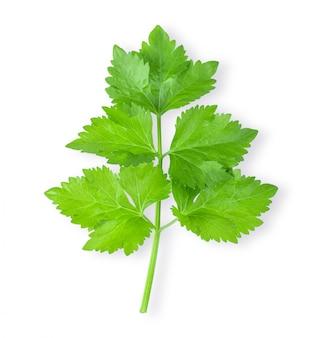 Celery leaf isolated