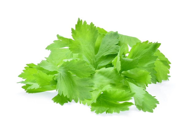 Celery leaves isolated on white background