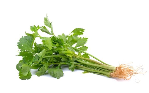 Celery on white