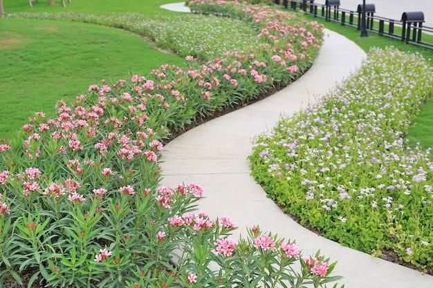 Цементная дорожка с заливом роз олеандра и цветущим цветком коромандель в саду
