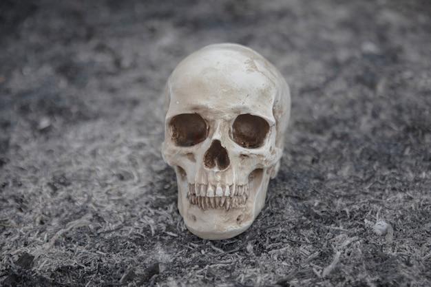 Цементный череп, созданный для фотосессий