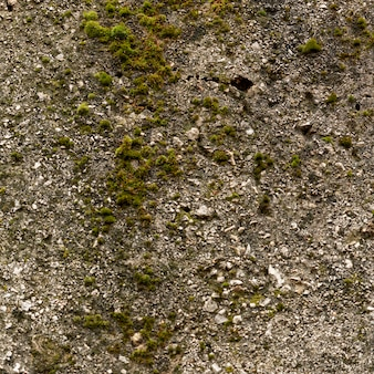 Cement surface with rocks and moss