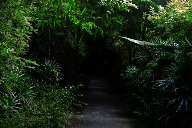 Cement walkway to dark forest for nature mistery