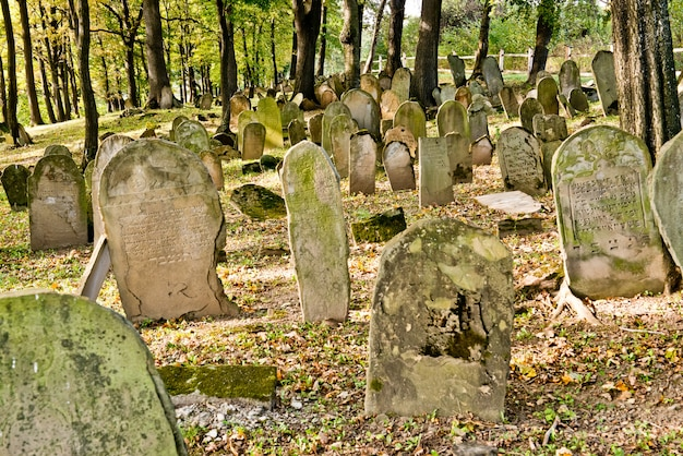 Cemetery jewish in poland - matzevot in forest