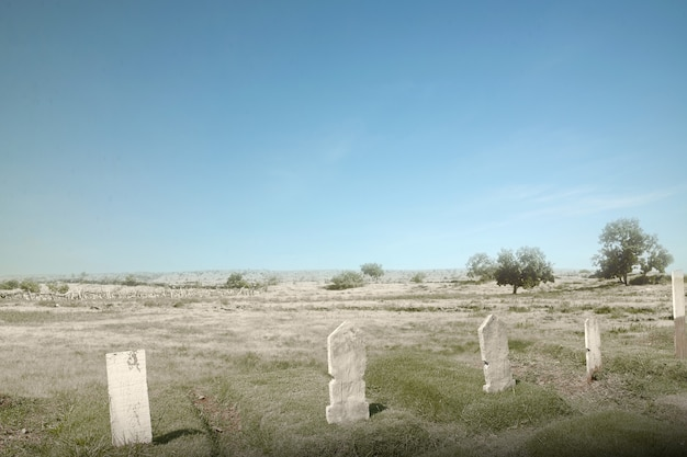 Cemetery with trees and many tombstones on a bright day