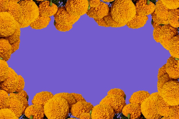Cempasuchil flower frame with colored background and space for text