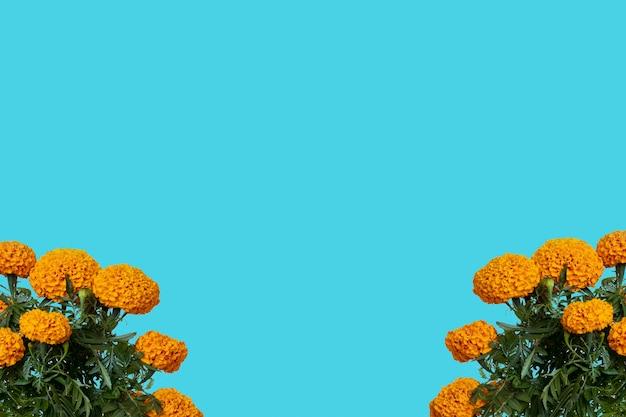 상단 및 파란색 배경에 텍스트를 위한 공간이 있는 cempasuchil 꽃