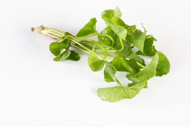 Centella asiatica leaves on white background