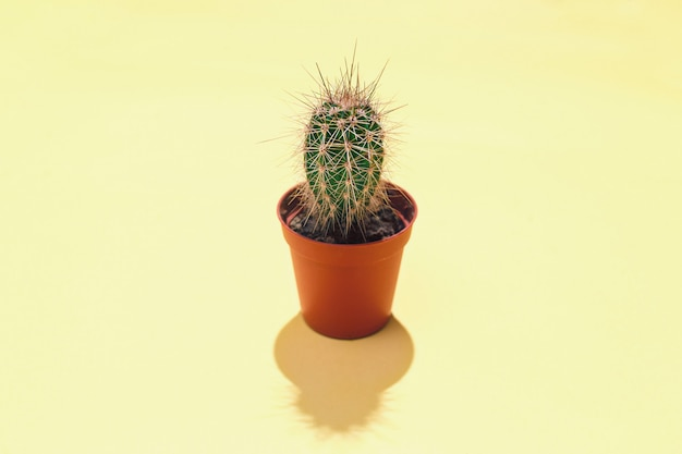 Central composition with an single evergreen succulent cactus in brown flowerpot a hard shadow on a yellow background