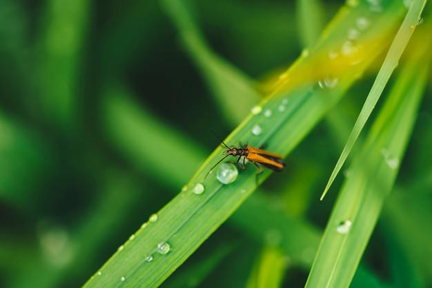 Мелкий жук cerambycidae на яркой блестящей зеленой траве