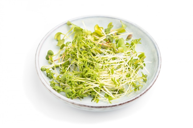 Ceramic plate with microgreen sprouts of radish and cress isolated on white background. side view.
