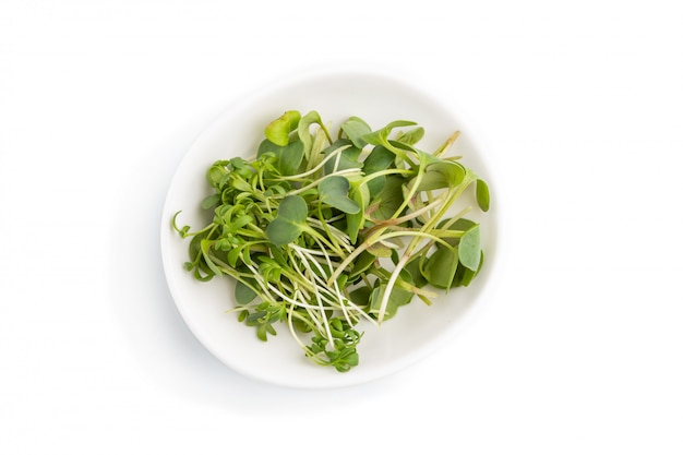 Ceramic plate with microgreen sprouts of radish and cress isolated on white background. top view.