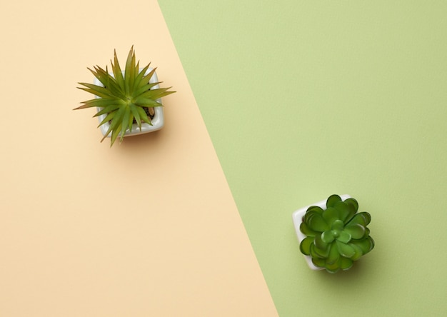 Ceramic pot with growing plant on a green background