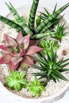 흰색 표면에 고립 된 다육 식물의 다양한 세라믹 흰색 화분