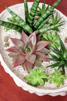 다육 식물의 다양한 세라믹 흰색 화분 프리미엄 사진