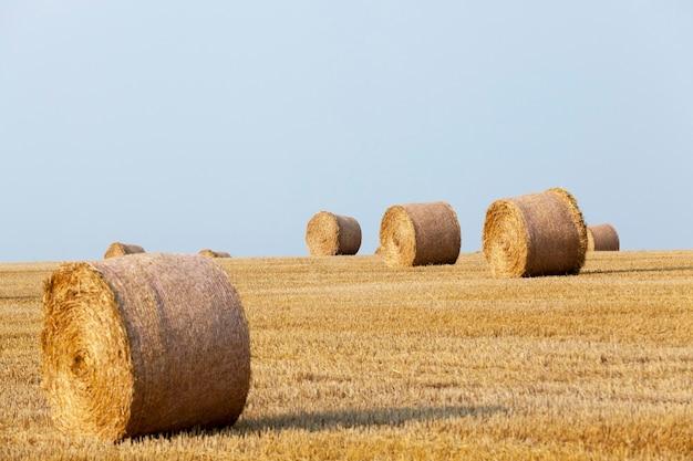 穀物農地-穀物、小麦の収穫が行われる農地。
