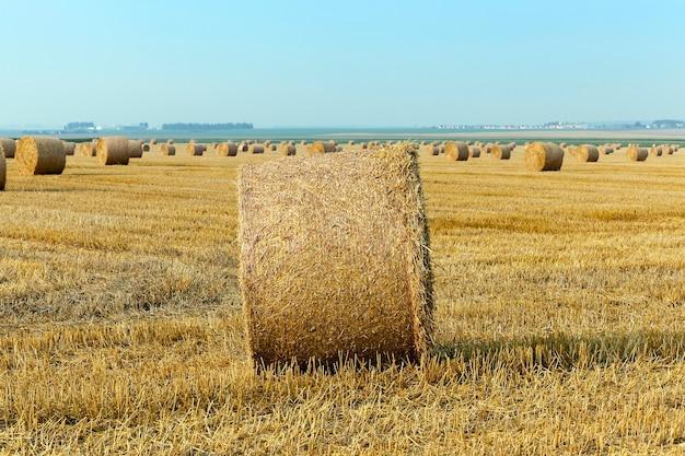 곡물 농장