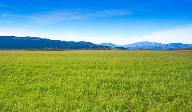 スペインの牧草地として穀物フィールド緑もやし