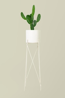 Pianta di cactus cereus in vaso su supporto