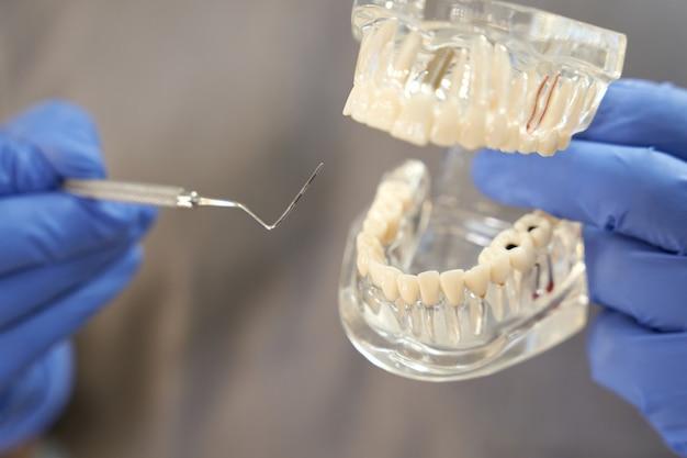 치아와 치과 선택의 복제본으로 포즈를 취하는 공인 치과 의사