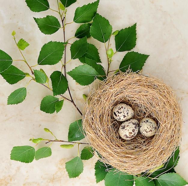 ウズラの卵と大理石の白chの小枝の巣